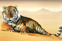BengalTigerInSand