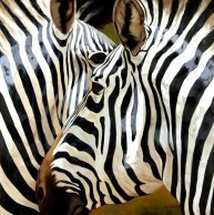 Zebra Close-up (Giclee)