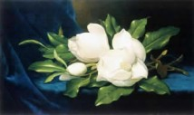 Giant Magnolias On Blue Velvet Cloth