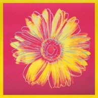 Daisy, c. 1982 (Fuschia and Yellow)