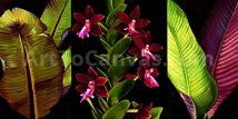 Red Orchids and Palm Trees