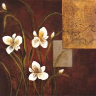 Orchid Melody I