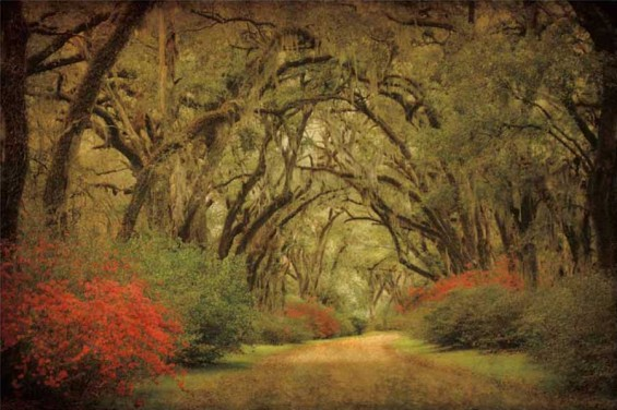 Road Lined With Oaks & Flowers