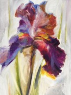 Colors of Iris I