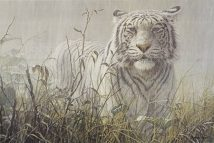 Monsoon- White Tiger