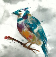 BlueJay-Fontaine