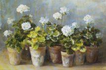 White Geraniums Nai WA